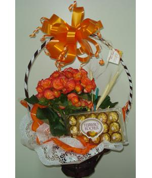 Cód: 5373 Begônia com chocolate