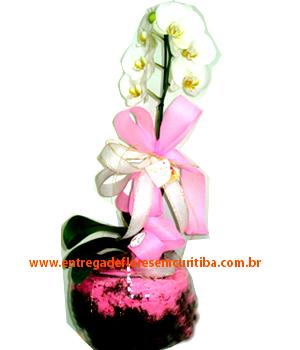 Cód: 5347                                      Vaso de Orquidea no Vidro GG