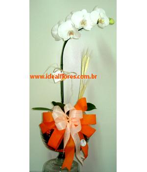 Cód: 5362 Orquídea no Vidro