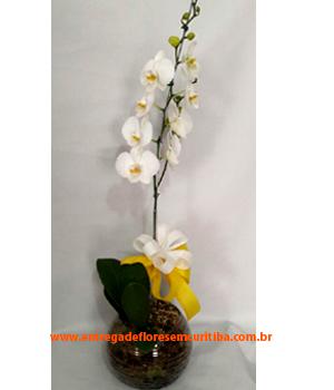 Cód: 5502                  Orquídea