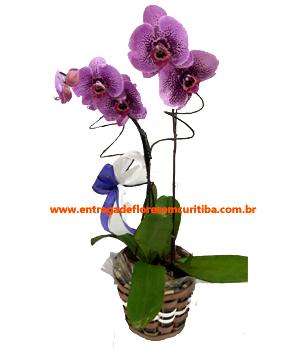 Cód: 5204                                                                        Orquídea