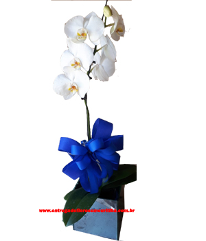 Cód: 5389  Vaso de Orquídea