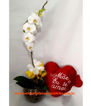 Cód: 5616           Orquídea + Pelúcia