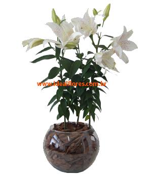 Cód: 5291      Vaso de Lírio
